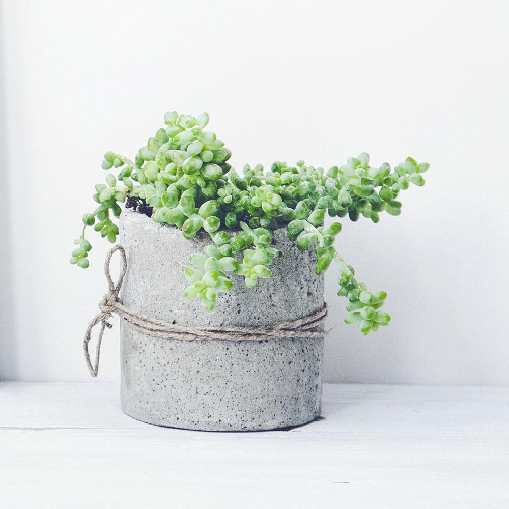 Elft-interieur-planten-12