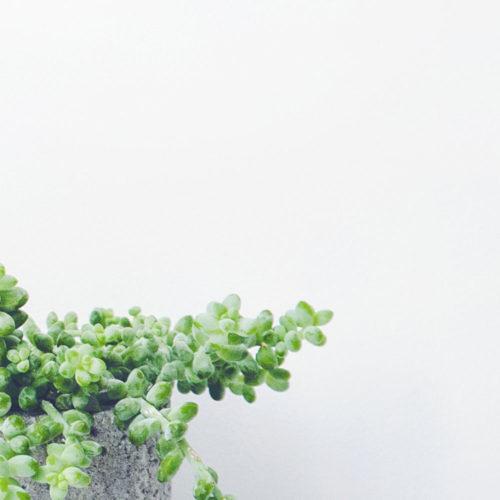 Elft_interieur-planten-18